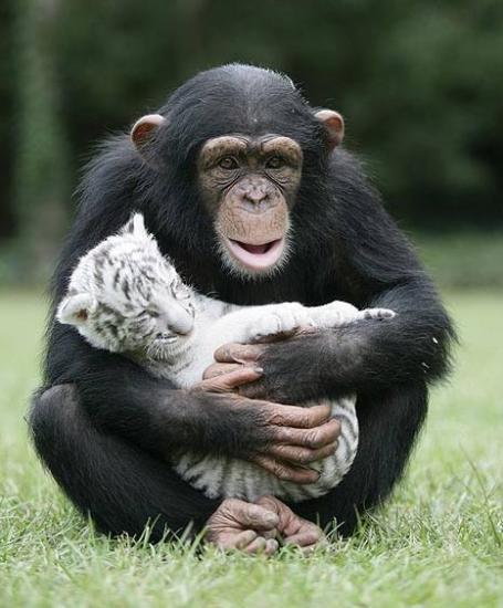 macaco cuidando de um humano
