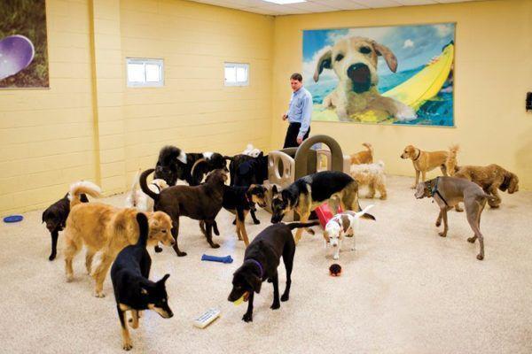 7 maneiras de trabalhar com animais