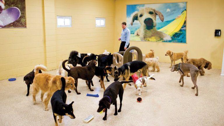 Exposição de cães