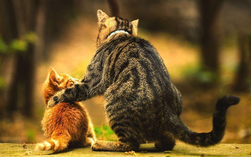 Gato mãe e gatinho filhote