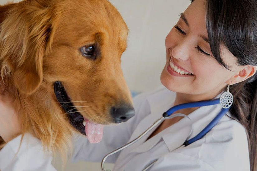 Veterinaria junto com cachorro
